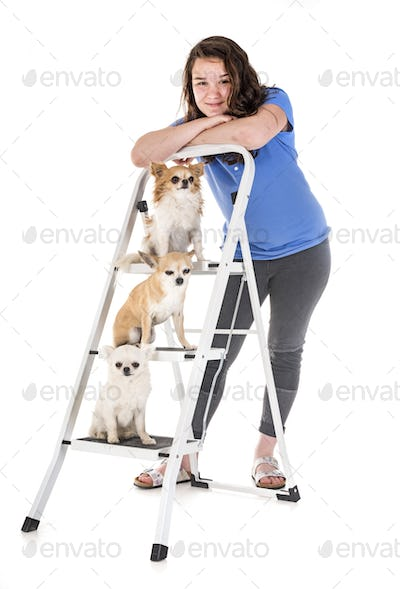 chihuahuas, owner and obedience