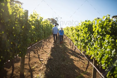 Rear view of couple walking amidst plants at vineyard
