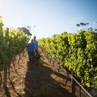 Couple standing by wheelbarrow amidst plants at vineyard