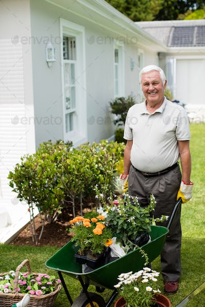 Senior man holding a wheelbarrow during gardening