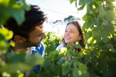 Happy couple seen through plants at vineyard
