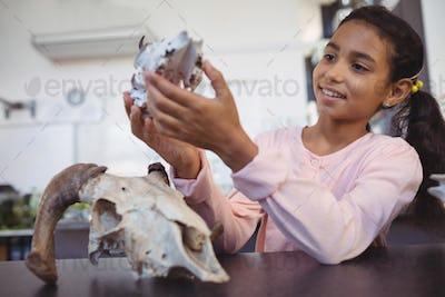 Happy elementary student examining animal skull by desk