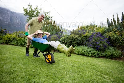 Senior man carrying his partner in wheelbarrow