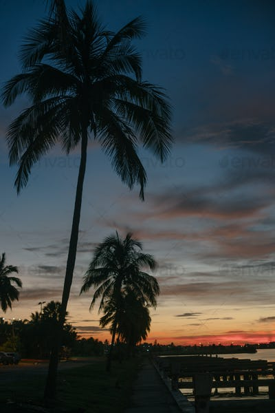 Palm trees at dawn in Cuba