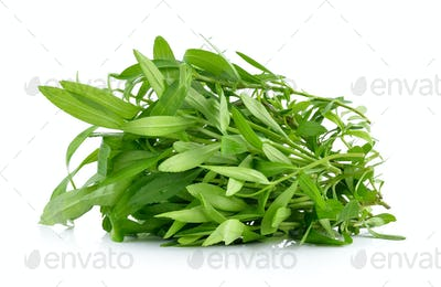 Tarragon herbs on white background