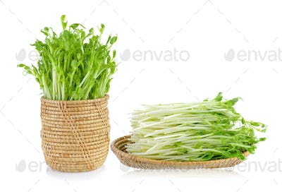 green pea sprouts on white background