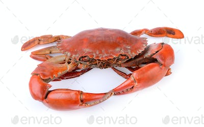 sea crab on white background