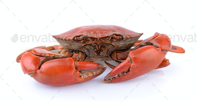 seacrab on white background