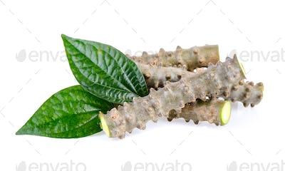 Tinospora crispa on white background
