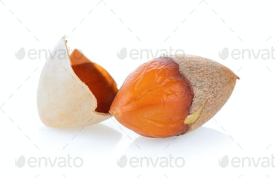Ginkgo seeds on white background