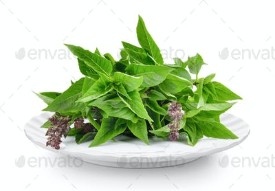 Sweet Basil  in plate on white background