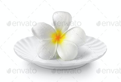 Tropical flowers frangipani in white plate on white background
