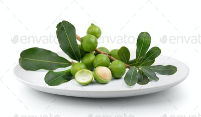 fresh macadamia nut in plate isolated on a white background