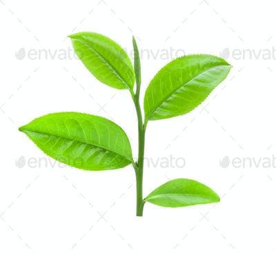 tea leaf on isolated white background