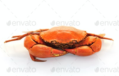 Boiled crabs prepared