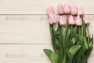 Pink tulips on white wooden background, top view