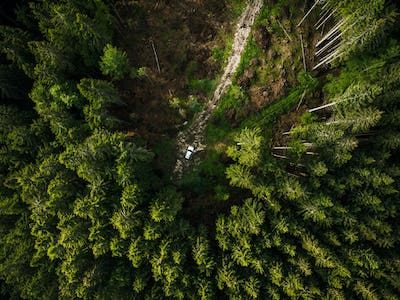 Off road car in the middle of forest, aerial top down view