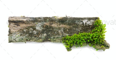 Moss on a wooden stump isolated on white background