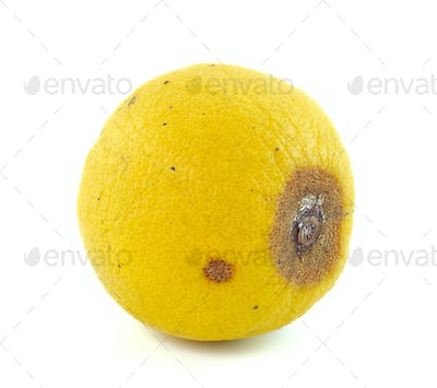 rotten Lemon fruit isolated on white