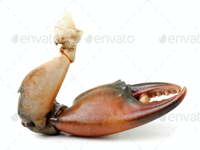 crab claw isolated on white background