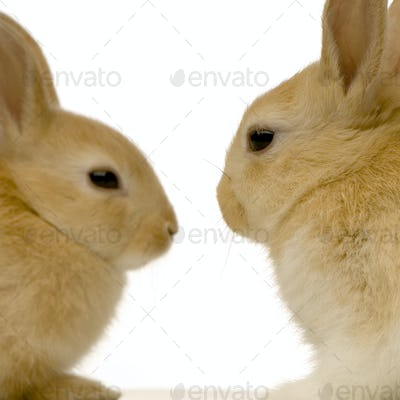 rabbits dating