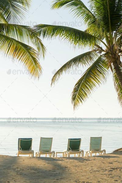 Tropical Island Deckchairs