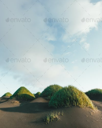 Famous grass hills on black desert near Stokksnes