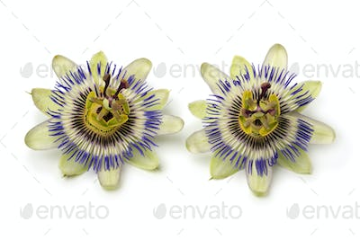 Two Passiflora edulis flowers