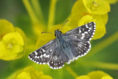 Beautiful butterfly sitting on yellow flowers