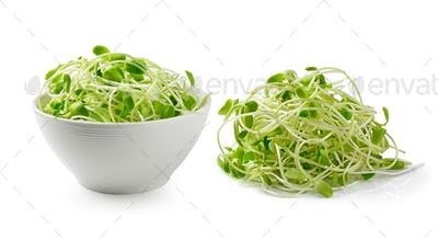 green young sunflower sprouts isolated on white background