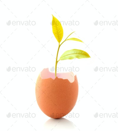 Young gold plant grow in eggshell isolated on white background