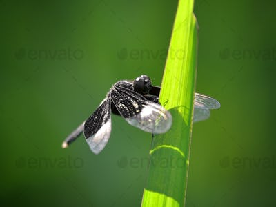 dragonfly sits on a grass on a meadow