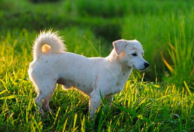 puppy dog in green meadow grass