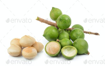 fresh macadamia nut on white background