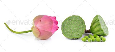 Lotus seed and pink lotus isolate white background