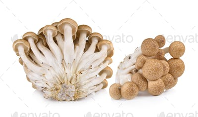 Brown beech mushrooms isolated on white background