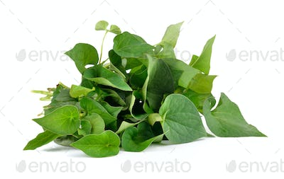 Herbal fish mint leaves isolated on white background