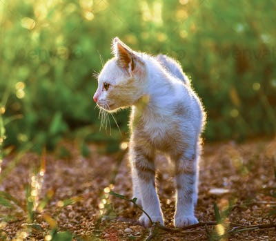 Young cat on green meadow