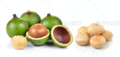 fresh macadamia nut on a white background
