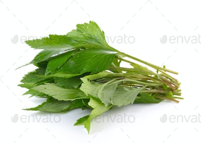 White mugwort on white background