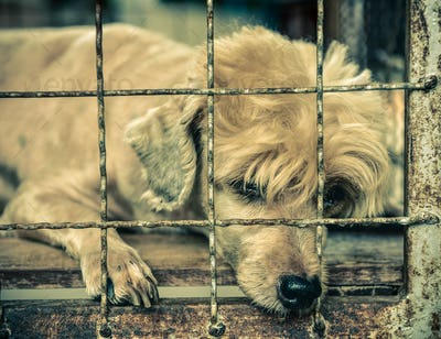 lonely old dog in cage