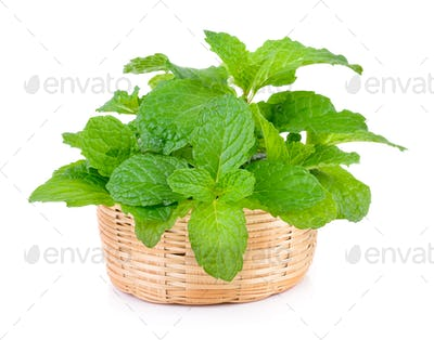 mint leaf in the basket on white background