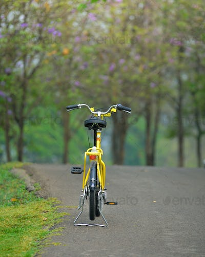 bicycle in the garden road