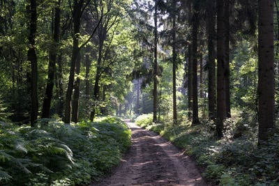 Forest lane in the Bergherbos