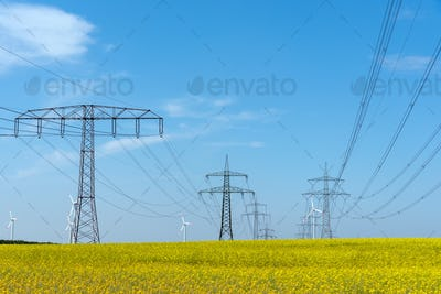 Power supply lines in a field of flowering oilseed rape