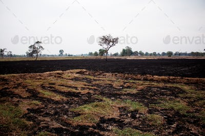 Grasses burned on fields