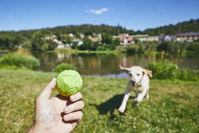 Summer time with dog in countryside