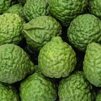 Fresh kaffir limes, bergamot fruit for herbal products