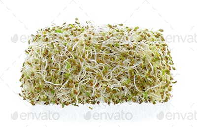 Sprouted alfalfa seeds on a white background
