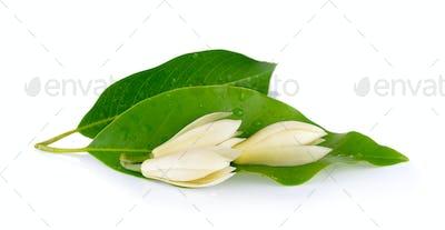 White Champaka